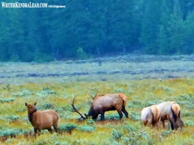 Elk-FS