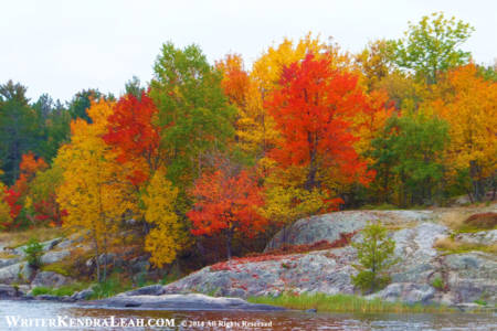 Brilliant Fall Colors in Voyageurs National Park