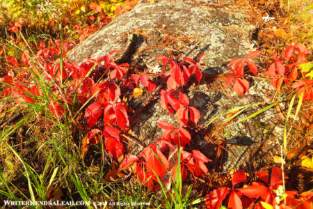 Fall Leaves on Boulder, Voyageurs National Park