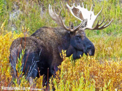 Moose-Tetons-FS